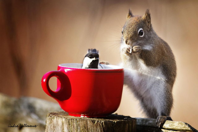 """Taking a cup together"". (Photo by Andre Villeneuve)"