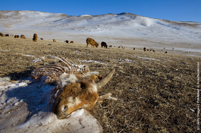 Extreme Mongolian Winter