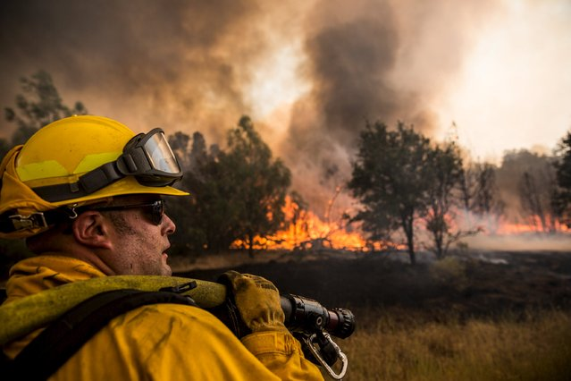A firefighter watches for spot fires at the Rocky Fire in Lake County, California July 30, 2015. (Photo by Max Whittaker/Reuters)