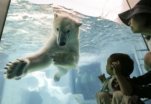 A little boy (R) looks at a polar bear as it swims in its enclosure's pool at Ueno Zoo in Tokyo, Japan, July 2, 2014. Highest temperatures in the Japanese capital rose over 30 degrees Celsius, three degrees more than average for this time of year. (Photo by Kimimasa Mayama/EPA)