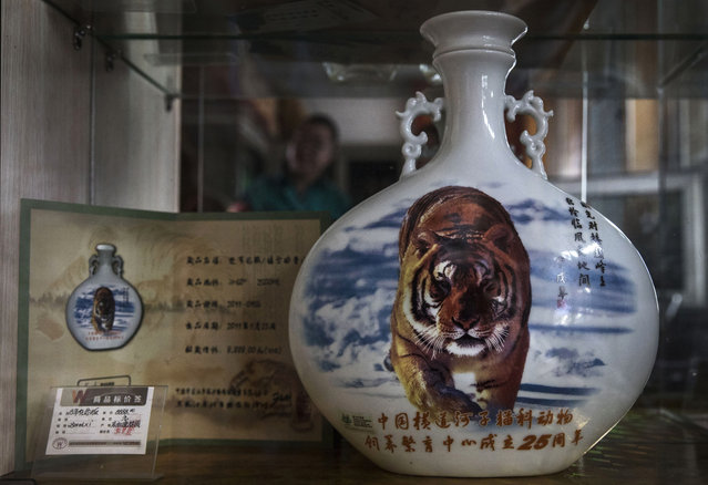 """A bottle of """"tiger wine"""" is seen for sale  at the Heilongjiang Siberian Tiger Park on July 5, 2017 in Harbin, northern China. (Photo by Kevin Frayer/Getty Images)"""