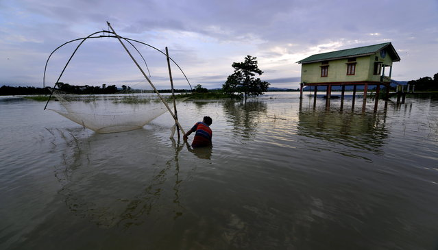 A man catches fish in the flood affected Morigaon district of Assam state, India, 21 August 2015. Flash floods, triggered by heavy rains in the past few days, have affected nearly 300000 people in thirteen districts of Assam state. The Brahmaputra River and its tributaries are flowing above the danger mark affecting many roads and bridges. (Photo by EPA/Stringer)