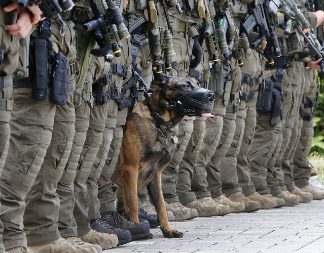 Police dog Whisky, a Belgium shepherd dog who is celebrating his second birthday today, takes party in an anti terror demonstration of German special forces in Frankfurt, Germany, Friday, September 8, 2017. (Photo by Michael Probst/AP Photo)