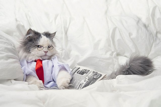 Just chilling, in bed, with a paper, whatever. (Photo by Svetlana Valyiskaya/Mercury)