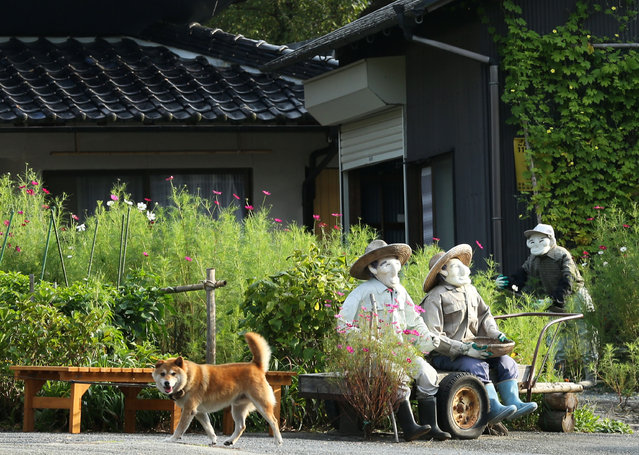 A pet dog walks through an illustration showing scarecrows sitting beside a road at Kakashi no Sato, or the Scarecrow's Hometown on September 10, 2014 in Himeji, Japan. (Photo by Buddhika Weerasinghe/Getty Images)