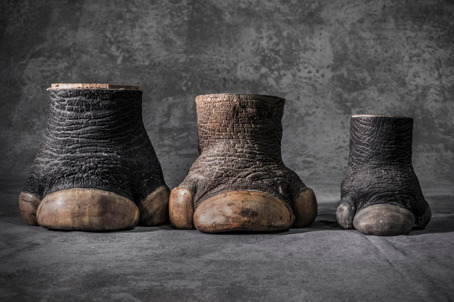 Confiscated rhino hooves of two adults (male and female) and one calf. The US Fish and Wildlife Service stores 1.3 million seized items at a warehouse in Colorado. (Photo by Britta Jaschinski/Photographers Against Wildlife Crime/Wildscreen/The Guardian)