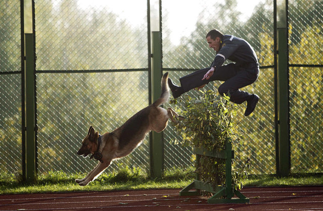 A Belarussian interior ministry officer jumps over an obstacle with his guard dog as they take part in a show of skills competition ahead of the ministry's 60th anniversary, at their base near the village of Gorany, some 32 km (20 miles) west of Minsk, October 4, 2012. (Photo by Vasily Fedosenko/Reuters)
