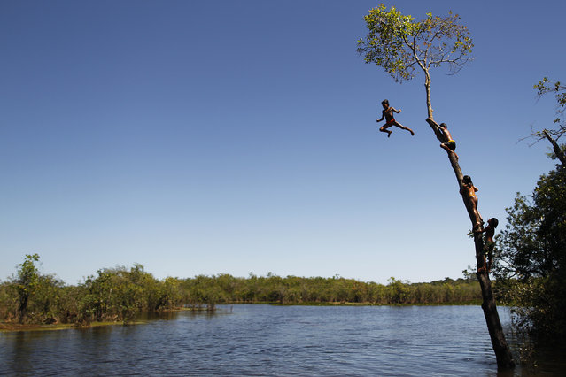 "Yawalapiti children climb a tree to jump into the Xingu River during the preparations for the celebration of ""quarup"", a ritual held to honor in death a person of great importance to them, in the Xingu National Park, Mato Grosso State, May 7, 2012. (Photo by Ueslei Marcelino/Reuters)"