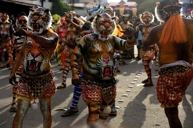 """Indian performers painted as tigers take part in the """"Pulikali"""", or Tiger Dance, in Thrissur on September 17, 2016. (Photo by Arun Sankar/AFP Photo)"""