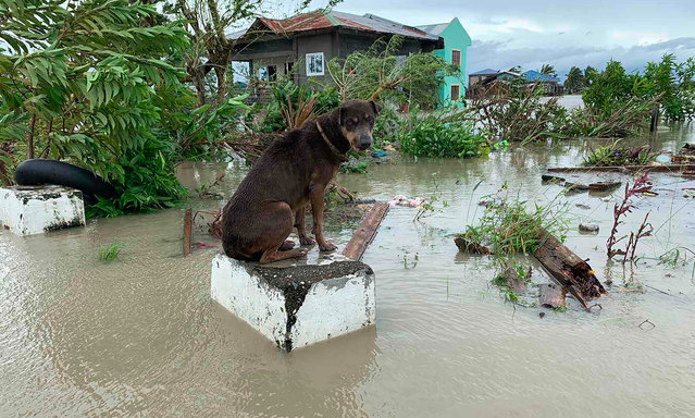 A dog sits on a submerged concrete post after tropical storm Molave hit the town of Pola, Oriental Mindoro province on October 26, 2020. (Photo by Erik de Castro/AFP Photo)