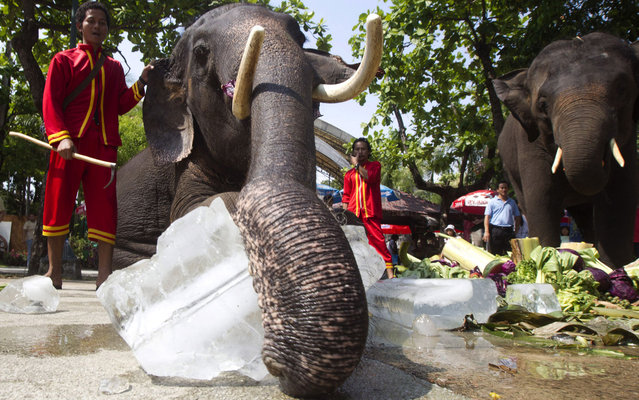 An elephant plays with a block of ice given to beat the heat at Dusit Zoo in Bangkok, Thailand, on April 2, 2013. The weather turns warmer in Thailand as the country enters its summer season. (Photo by Sakchai Lalit/AP Photo)