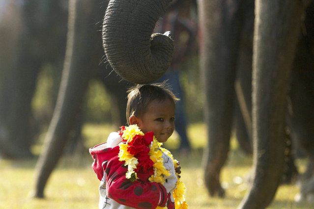 A Nepalese boy stands under an elephant's trunk during the first day of 12th Chitawan Elephant Festival at Sauhara, Chitawan, some 154 kilometer from the capital of Kathmandu, Nepal, 26 December 2015. (Photo by Hemanta Shrestha/EPA)