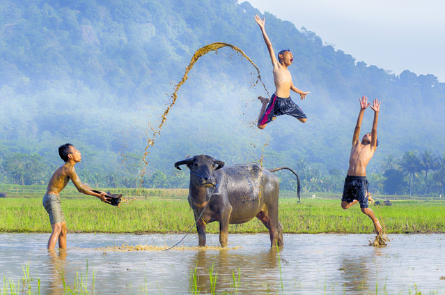 These heartwarming images capture the pure happiness of young children playing with a buffalo in the sweltering Indonesian heat on July 28, 2018. The children are all sons of the farmers who work on the rice farms in the West Java region of Indonesia. Amateur photographer Tamlikho Tam, 46 from Depok in West Java Indonesia snapped up the joyful moment because it shows what a typical childhood should be like without technology. (Photo by Tamlikho Tam/South West News Service)