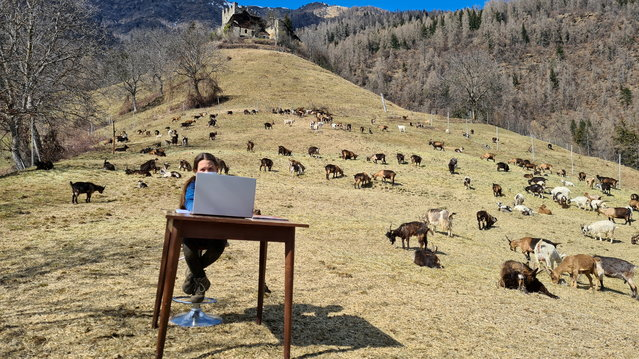 10-year-old Fiammetta attends her online lessons surrounded by her shepherd father's herd of goats in the mountains, while schools are closed due to coronavirus disease (COVID-19) restrictions, in Caldes, northern Italy, March 20, 2021. (Photo by Martina Valentini/Val di Sole press office/Handout via Reuters)