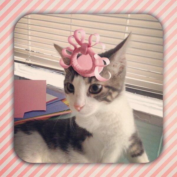 Three-legged Kitten and Hat
