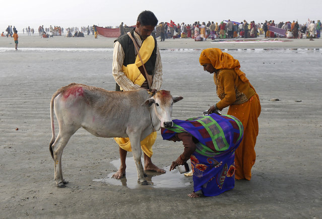 "Hindu pilgrims seek blessings from a cow after taking a dip at the confluence of the river Ganges and the Bay of Bengal, ahead of the ""Makar Sankranti"" festival at Sagar Island, south of Kolkata, India, January 14, 2016. (Photo by Rupak De Chowdhuri/Reuters)"
