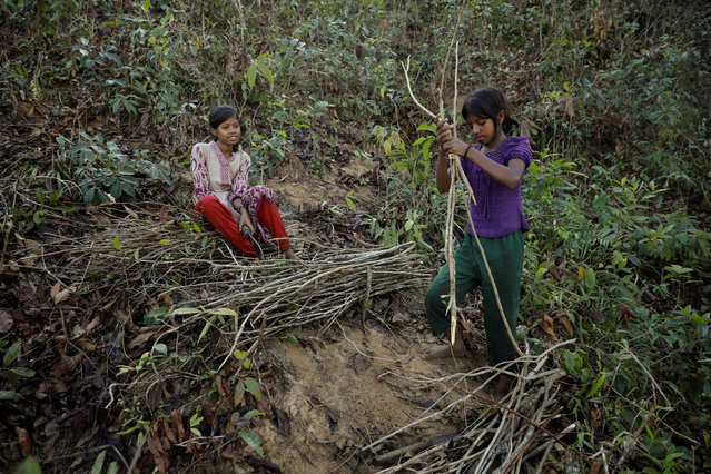 """Rohingya refugees and Sabura Khatun's daughters cut firewood near the Palongkhali refugee camp near Cox's Bazar, Bangladesh December 24, 2017. Three months ago, Sabura a mother of six, arrived to Bangladesh from Myanmar's town of Maungdaw.  Twice per week, while her husband awaits with the youngest baby, Sabura and five of her daughters walk barefooted four kilometres from the refugee camp to a forest to bring firewood to cook rice. Every month she receives 25 kilograms of rice which is not enough to sustain her family. """"Whenever I walk to the forest I am afraid of local peasants who are attacking Rohingyas as they are cutting down firewood"""", Sabura said. """"My husband is sick, he can barely walk, I have no other choice, I have to take care of my family"""". (Photo by Marko Djurica/Reuters)"""