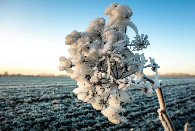Frost covers the fields on the outskirts of the town of Godewaersvelde, northwestern France on December 30, 2016. (Photo by Philippe Huguen/AFP Photo)