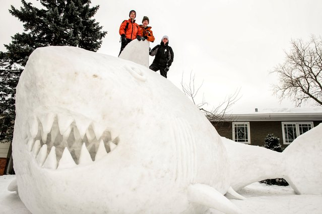 Three brothers, from left, Connor, Trevor and Austin Bartz built this 16 foot high snow shark in the front yard of their New Brighton, Minn. home, Wednesday, January 1, 2014.  It took them around 95 hours of work and they gathered the snow from houses in their neighborhood. (Photo by Glen Stubbe/AP Photo/Star Tribune)