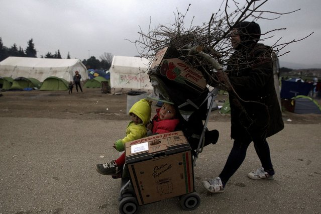 A refugee uses a baby stroller to transport her children and wood for a bonfire at a camp set by stranded refugees and migrants who are waiting to cross the Greek-Macedonian border, near the Greek village of Idomeni, February 29, 2016. (Photo by Alexandros Avramidis/Reuters)