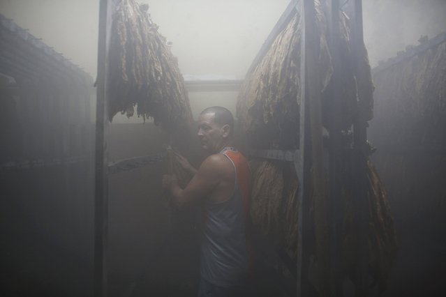 Mario Perez, 54, works in the moistening chamber at the Cohiba Tobacco factory in Havana, March 3, 2016. (Photo by Alexandre Meneghini/Reuters)