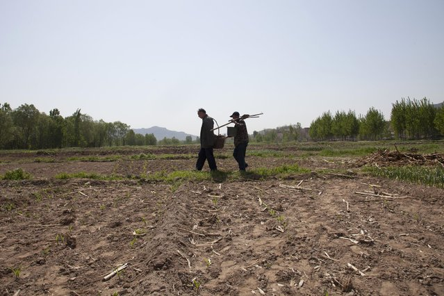 In this April 23, 2015 photo, friends Jia Wenqi, left, and Jia Haixia walk across a field in Yeli village near Shijiazhuang city in northern China's Hebei province. (Photo by Helene Franchineau/AP Photo)