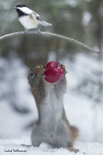 """""""You are hungry Berry?"""" (Photo by Andre Villeneuve)"""