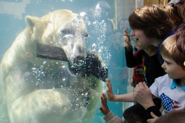 People look at a polar bear during the opening day of the new polar area at the zoo of Mulhouse on April 2, 2014. (Photo by Sebastien Bozon/AFP Photo)