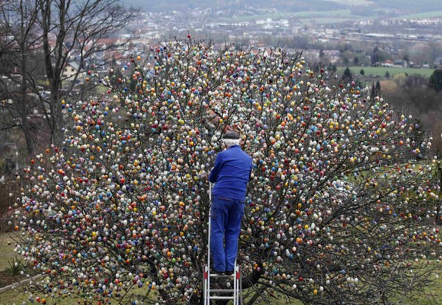 German pensioner Volker Kraft decorates an apple tree with Easter eggs in the garden of his summerhouse, in the eastern German town of Saalfeld, March 19, 2014. (Photo by Fabrizio Bensch/Reuters)