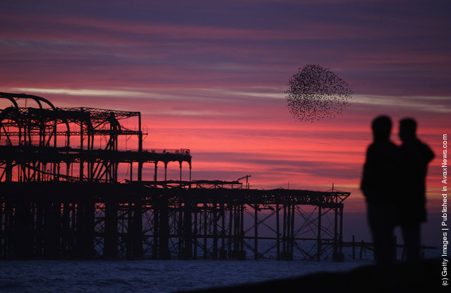 Starlings come home to roost on Brighton's Old Pier as the sun sets in Brighton, England
