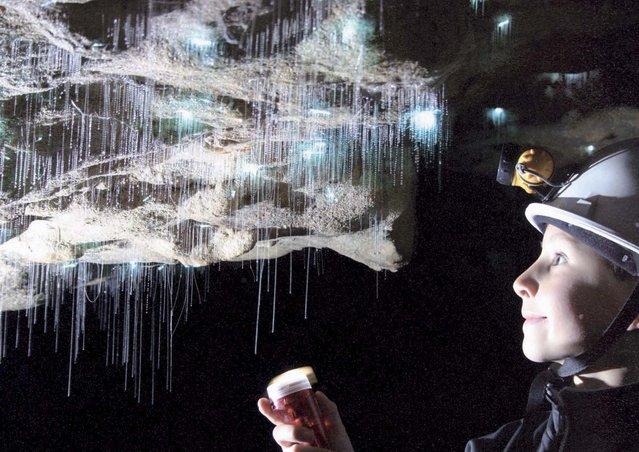Waitomo Glowworm Caves New Zealand