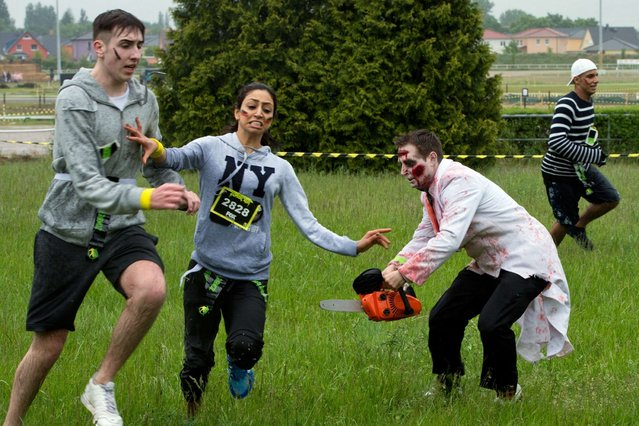 "Participants costumed as zombies try to catch hobby runners during the so-called Zombie-Run at the harness racing track Karlshorst in Berlin, Germany, 18 May 2014. The runners carry small flags in their belts which they have to get safely across the finishing line while the zombies try to steal them. The sporting event is based on the US television series ""The Walking Dead"". (Photo by Soeren Stache/DPA)"