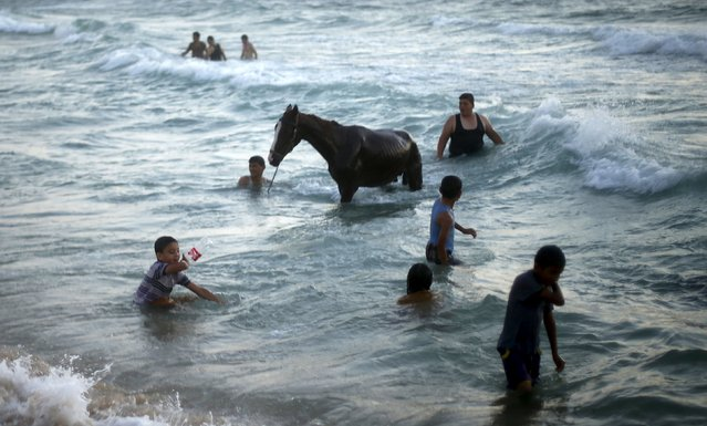 Palestinians wash a horse during warm weather in the Mediterranean Sea off the coast of northern Gaza Strip July 24, 2015. (Photo by Mohammed Salem/Reuters)