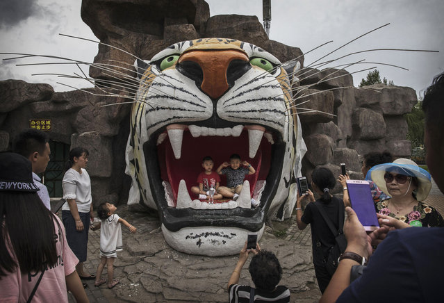 Chinese tourists pose for pictures in a monument of a tiger at the Heilongjiang Siberian Tiger Park on August 16, 2017 in Harbin, northern China. (Photo by Kevin Frayer/Getty Images)