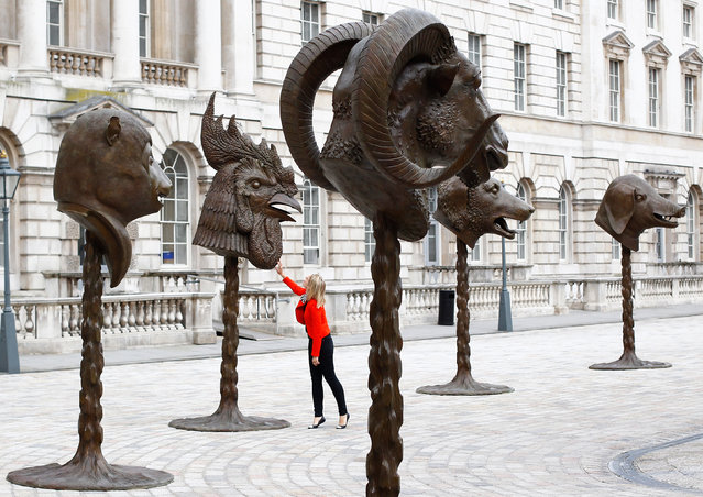 """A visitor looks at Ai Weiwei's """"Circle of Animals/Zodiac Heads"""" at Somerset House in London May 11, 2011. (Photo by Andrew Winning/Reuters)"""