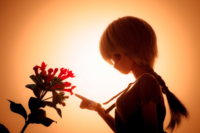 Dolls. One week, One flower No.6 -Bouvardia (red)-. (Suzuhico)