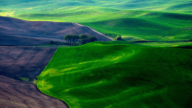 """The Palouse"". (Photo and comment by Dave Morrow)"