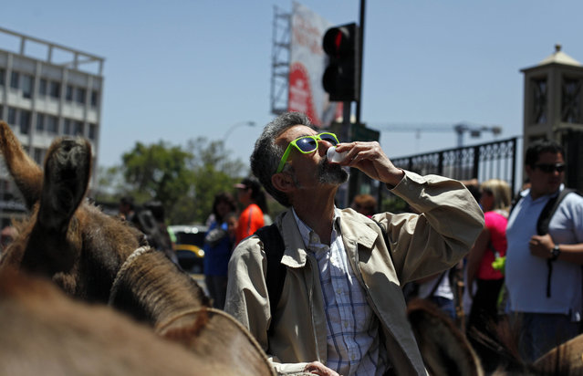 In this December 15, 2014 photo, a man stops to drink fresh donkey milk in the street in Santiago, Chile. The use of donkey's milk has persisted in some parts of the world. Even Pope Francis has said he drank it as a boy in Argentina, prompting an Italian company that produces the milk to give him two donkeys recently. (Photo by Luis Hidalgo/AP Photo)