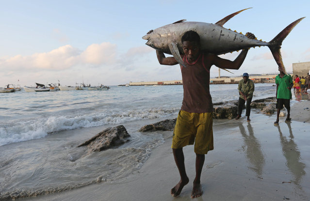 A Somali fisherman carries a fish from his vessel on the shores of the Indian Ocean on Liido beach, in Mogadishu, Somalia November 4, 2016. (Photo by Feisal Omar/Reuters)