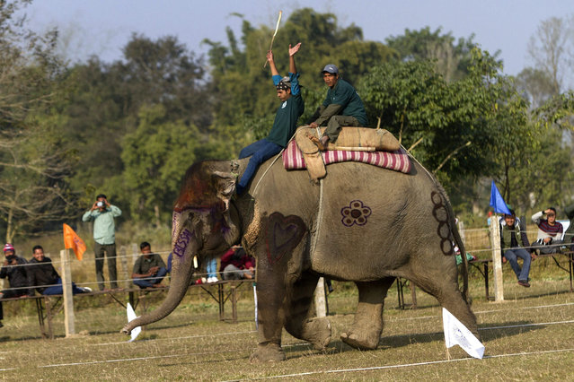Mahuts on an elephant compete in an elephant race on the first day of 12th Chitawan Elephant Festival at Sauhara, Chitawan, some 154 kilometer from the capital of Kathmandu, Nepal, 26 December 2015. (Photo by Hemanta Shrestha/EPA)