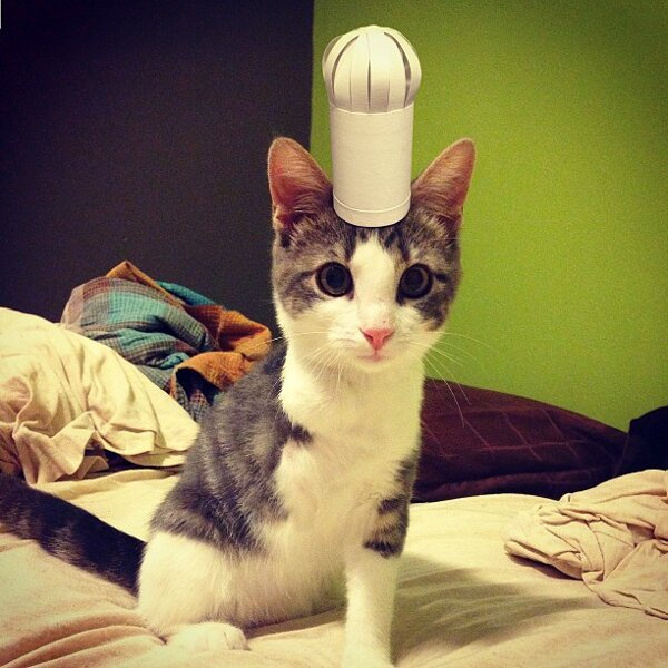 Three-legged Kitten and Hat