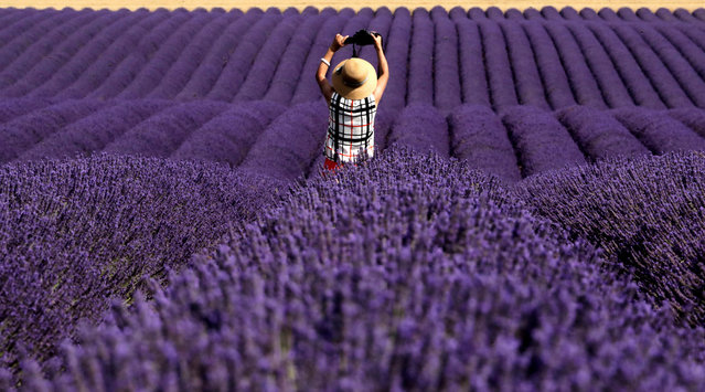 A Chinese tourist takes a picture in a lavender field in Valensole, France, July 13, 2018. (Photo by Eric Gaillard/Reuters)