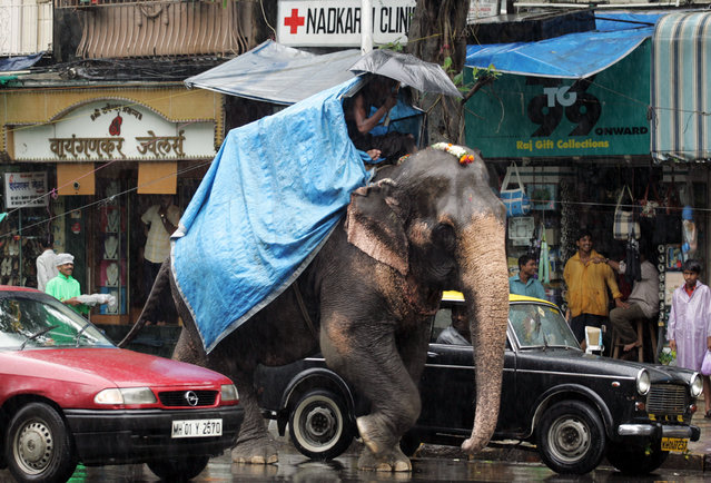 An elephant walks down a street among traffic as it rains in Bombay, July 2005. (Photo by Desmond Boylan/Reuters)