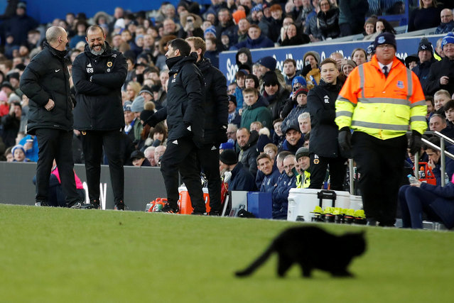 A black cat appears on the pitch during the Premier League match between Everton FC and Wolverhampton Wanderers at Goodison Park on February 2, 2019 in Liverpool, United Kingdom. (Photo by Carl Recine/Action Images via Reuters)