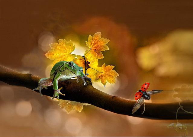 """""""Natura"""". (Photo by Giovanni Ambrosioni)"""