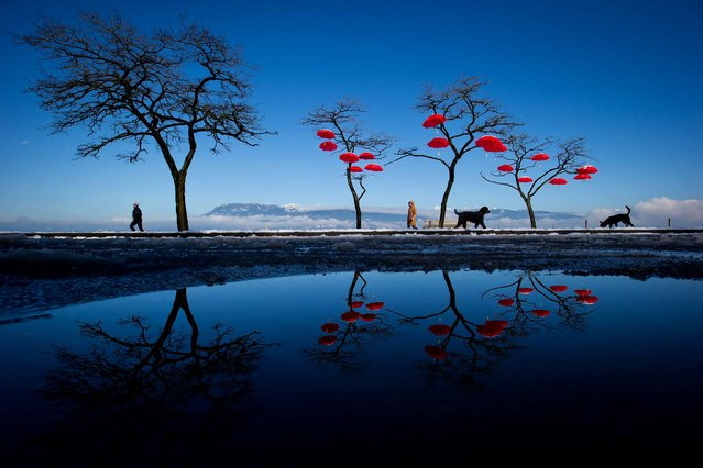 """Reflected in a puddle of melted snow, people and dogs walk past umbrellas suspended from trees at Spanish Banks Beach in Vancouver, British Columbia, on February 25, 2014. The art installation, called the """"Rainblossom Project"""", was put up by an anonymous group to be a celebration of the rain the city receives. (Photo by Darryl Dyck/The Canadian Press)"""