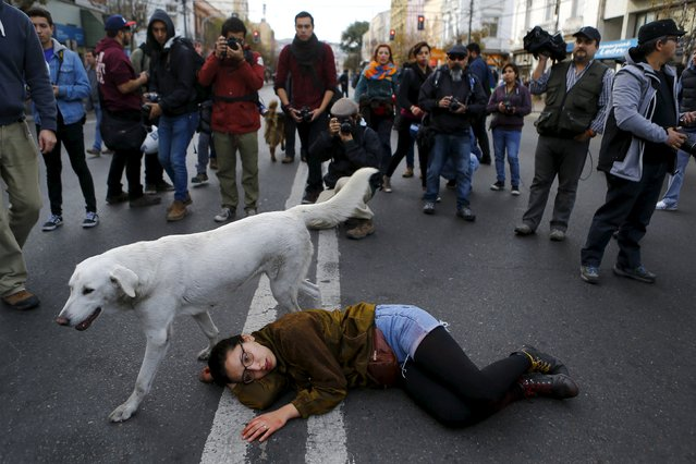 A demonstrator lies on the floor pretending to be dead, in reference to a student shot dead on May 14 after a protest march, during a rally, as Chile's President Michelle Bachelet delivers a speech inside the National Congress, in Valparaiso city, May 21, 2015. (Photo by Ivan Alvarado/Reuters)