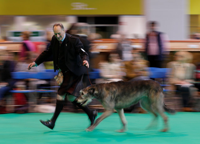 A man shows an Irish Wolfhound looks at a Dachshund during the first day of the Crufts Dog Show in Birmingham, Britain March 9, 2017. (Photo by Darren Staples/Reuters)