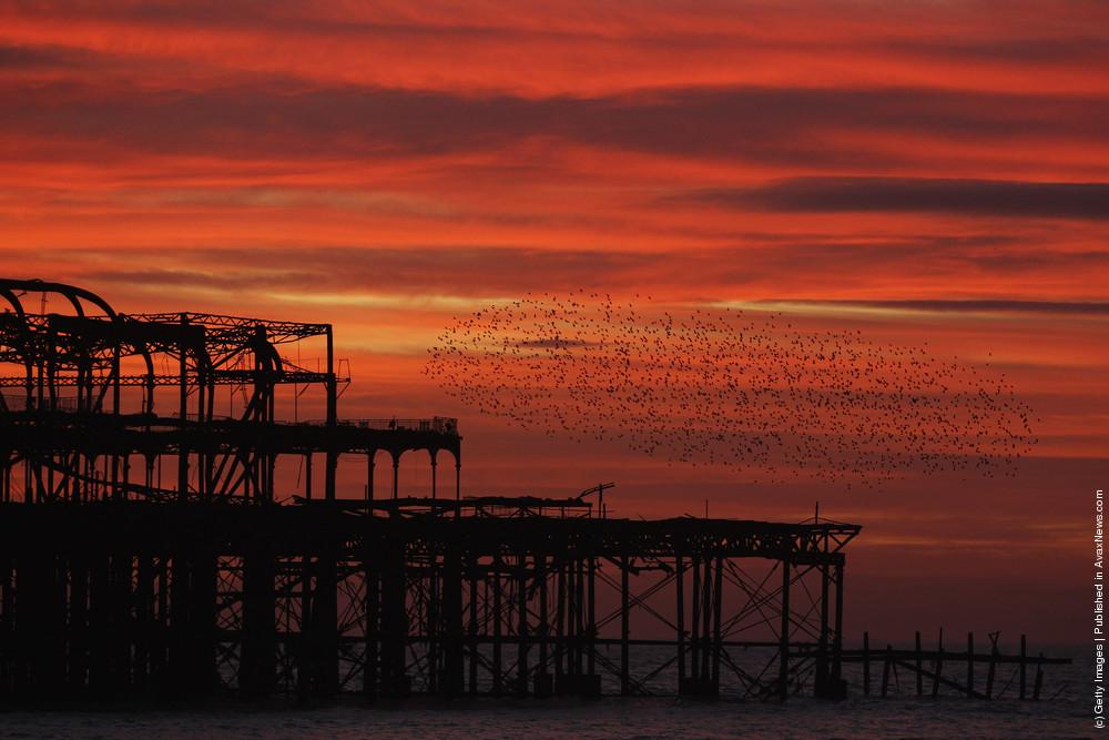 Starlings Mark The Winter Solstice in Brighton