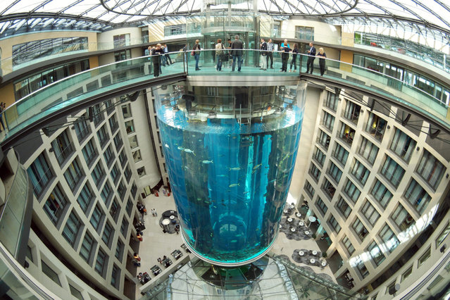 A view of the AquaDom, the largest freestanding cylindrical aquarium in the world located in Berlin, Germany, 29 July 2015. The acrylic glass container in the Sea Life centre allows vistors to travel through the 22 metre high tank which has a thickness of up to 22 cm. More than 1500 fish live in a million litres of water. (Photo by Joerg Carstensen/EPA)